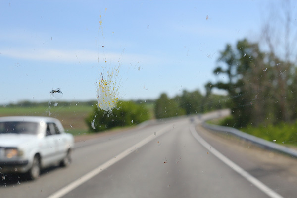 New app helps identified splattered bugs on your windshield