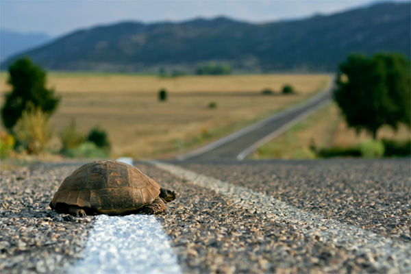 Freak accident sends turtle hurdling toward windshield