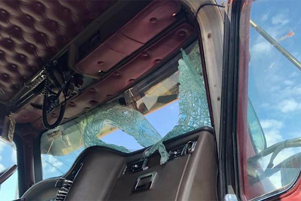 Turkey survives crash through semi truck's windshield